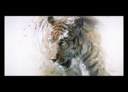 Force of Nature - Tiger