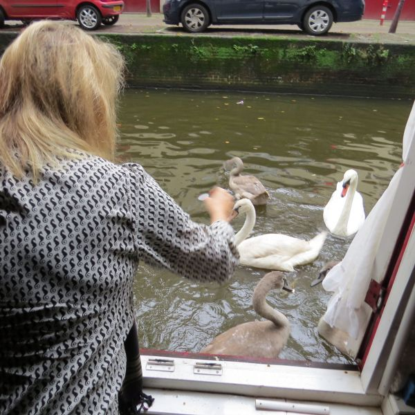 I loved feeding swans from my bedroom window