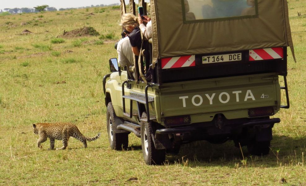 We almost thought this leopard cub was going to jump in the vehicle with us