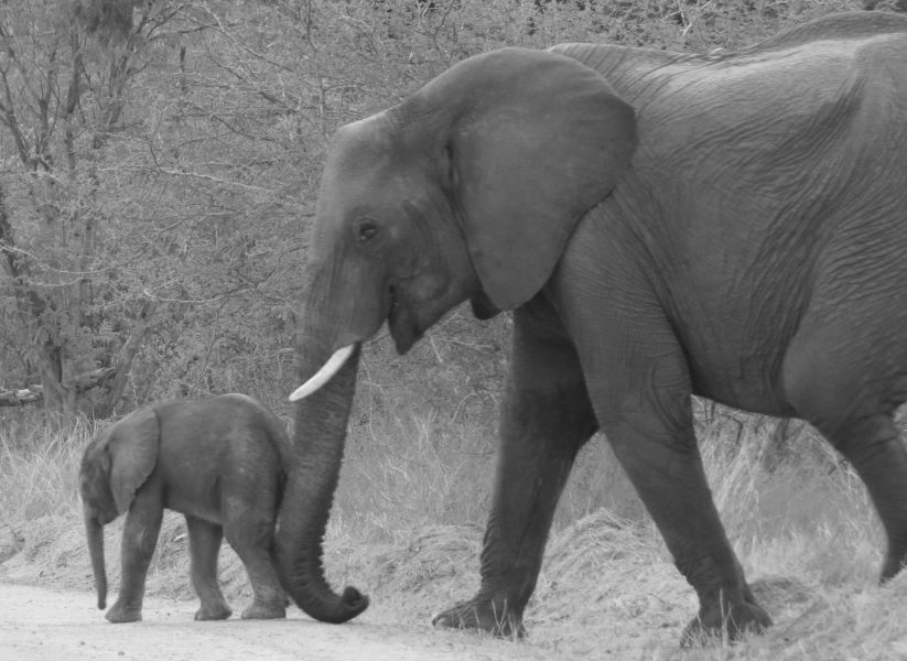 If this baby elephant is going to grow up safely, we need to educate local children to the importance of their wildlife!