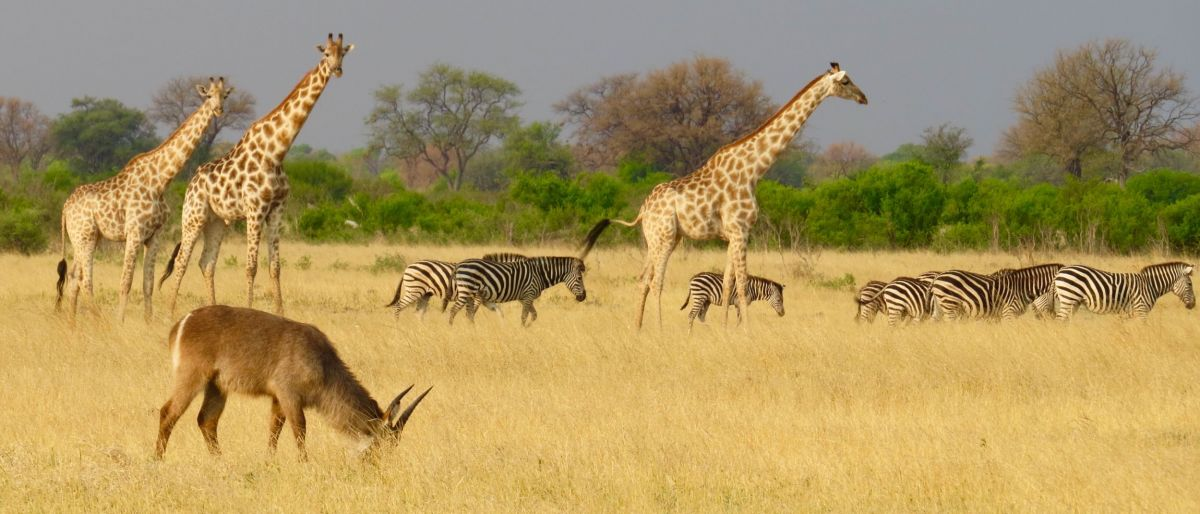 We saw lots of animals with the kids on the game drive-These giraffes were beautiful!