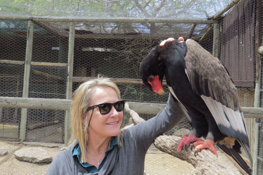 This Bateleur Eagle was caught in a snare and came to love being petted by humans.