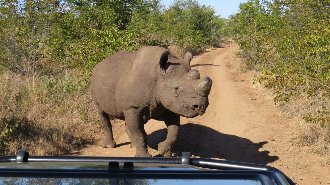On our way to one of the schools we were incredibly lucky to see one of the few remaining rhinos left in the