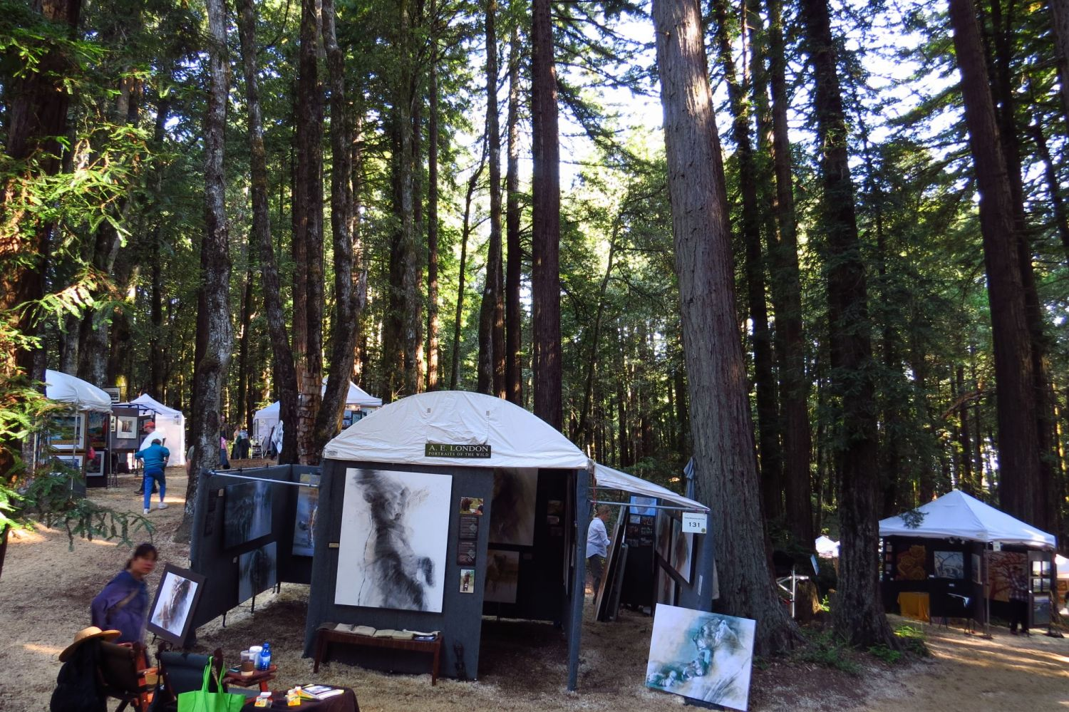 The Kings Mountain show was beautiful- among those towering redwoods, you almost feel like you're in a cathedral!